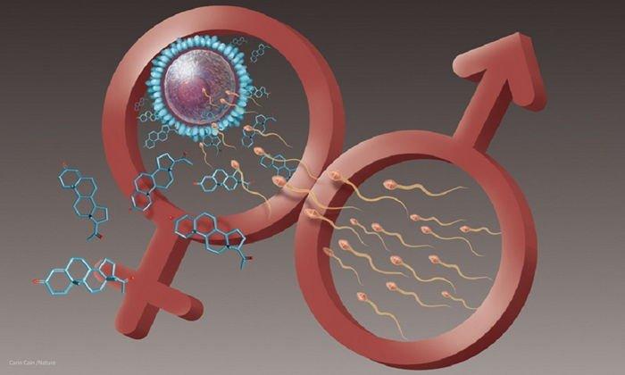 Витамин Е обеспечивает правильную работу половых желез и поддерживает репродуктивную функцию