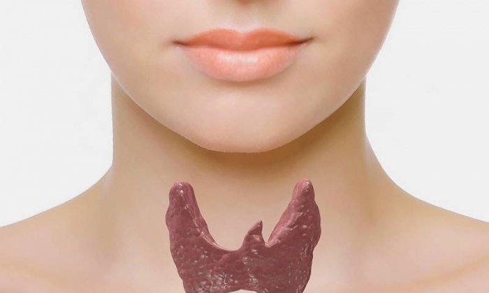 Папаверин не назначают при Папаверин не назначают при заболеваниях щитовидной железы