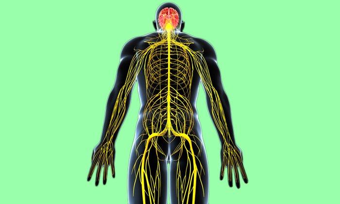 Хорош препарат тем что стимулирует проведение импульсов по нервным волокнам