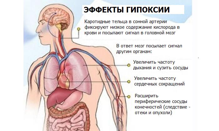 Витамины А и Е повышают устойчивость тканей к гипоксии