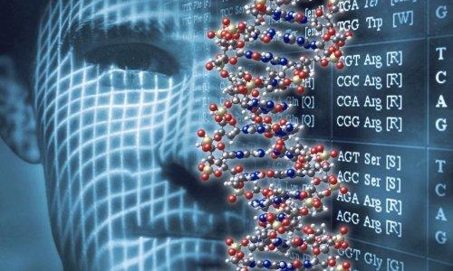 Актовегин дополнительно способствует восстановлению цепочек ДНК