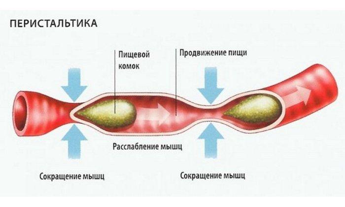 Лекарственный препарат содержит макрогол (полиэтиленгликоль), действие которого направлено на усиление перистальтики толстого кишечника