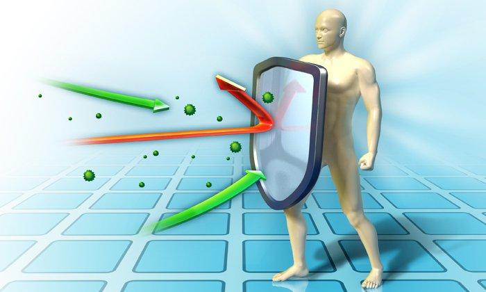 Препарат имеет иммуностимулирующее действие