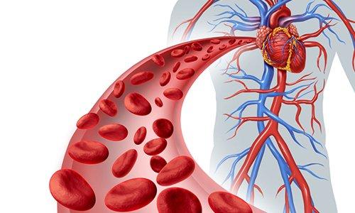 При регулярном использовании улучшает общее состояние стенок вен и капилляров сосудистой системы