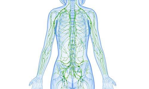 Препарат улучшает лимфатический отток