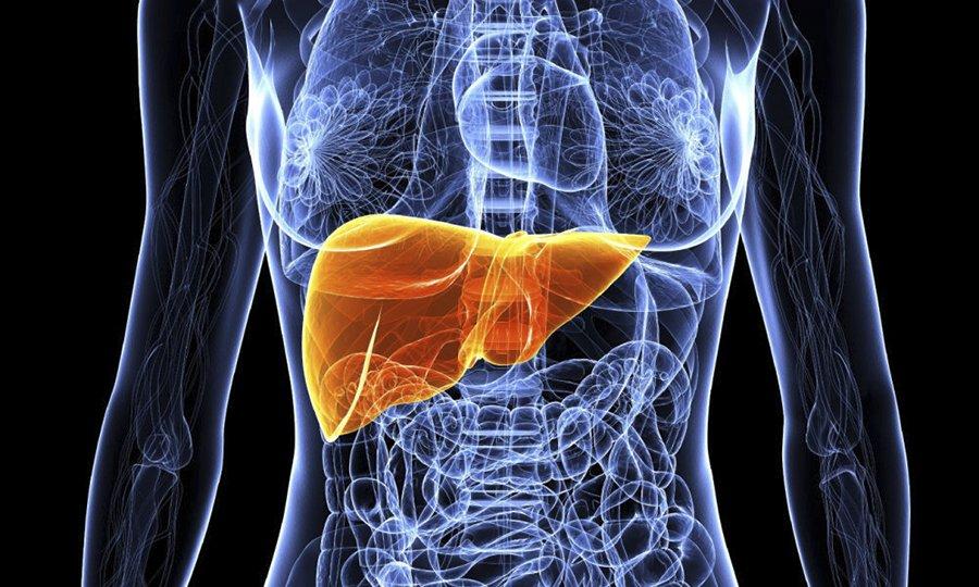 Результатом приема Лидокаина и Цефазолина может быть нарушение функций печени