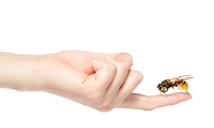 Левомеколь незаменим в терапии при укусах насекомых