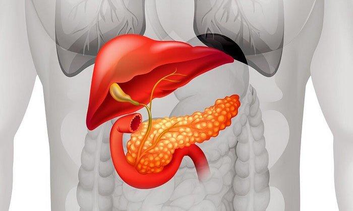 Панкреатин стимулирует выделение ферментов, которые производятся поджелудочной железой