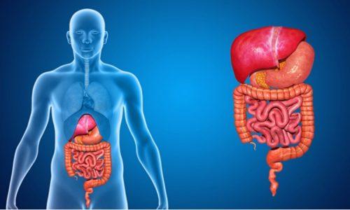 Взаимодействие веществ, входящих в состав препарата, направлено на улучшение пищеварительной функции