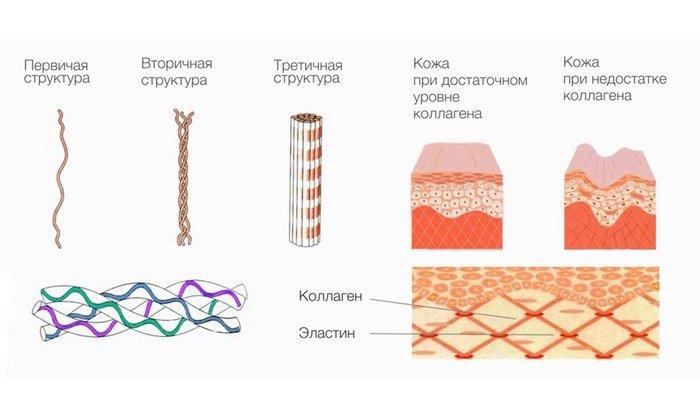 Активное вещество также помогает синтезировать коллаген, ускоряя процессы восстановления тканей