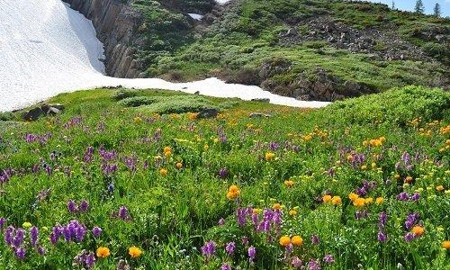 Эффективность препаратов основана на целебной силе прополиса и трав, произрастающих в Сибири и Горном Алтае