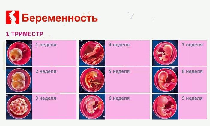 Лекарство не назначают женщинам в l триместре вынашивания плода из-за высоких рисков возникновения нежелательных реакций со стороны организма будущей матери