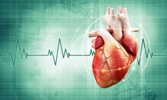 Витамин Е поддерживает работу сердечной мышцы