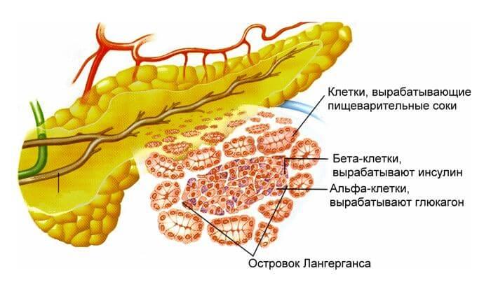В организме цинк обеспечивает синтез инсулина и препятствует повреждению клеток поджелудочной железы