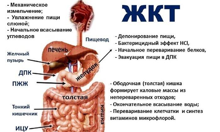 Лекарственное средство воздействует на энкефалинергическую систему органов ЖКТ, устраняя нарушение моторики желудка и кишечника