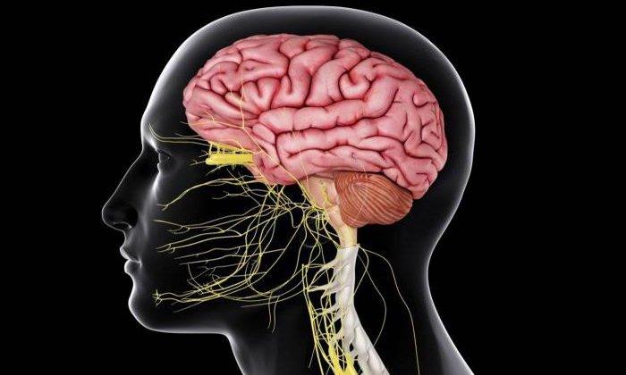 Дротаверин не оказывает негативного воздействия на центральную нервную систему