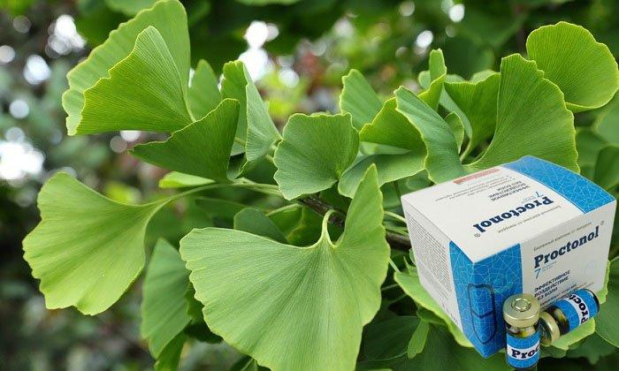 Концентрат растения гинкго билоба улучшает работу пищеварительной системы, предотвращает повторное развитие заболевания