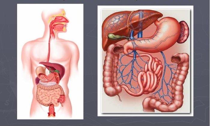 Препарат Карсил назначается для поддерживающей терапии пациентам с хроническими заболеваниями органов пищеварения