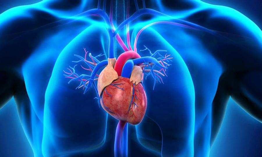 Противопоказан прием Анальгина и Дротаверина при хронической сердечной недостаточности