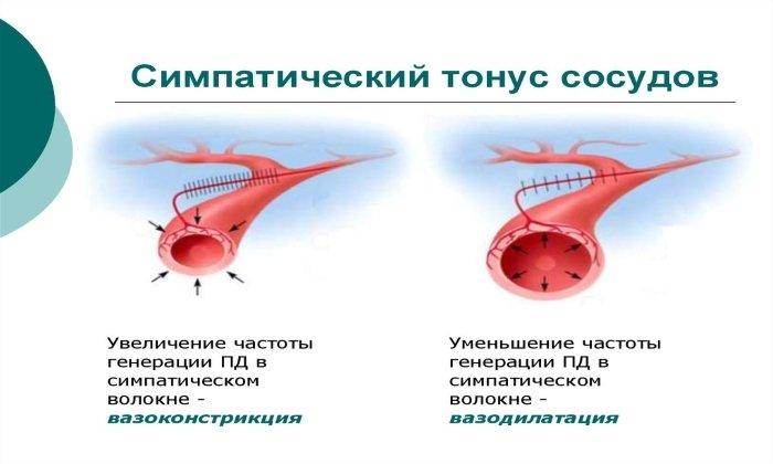 Дротаверин устраняет гипертонус мозговых сосудов