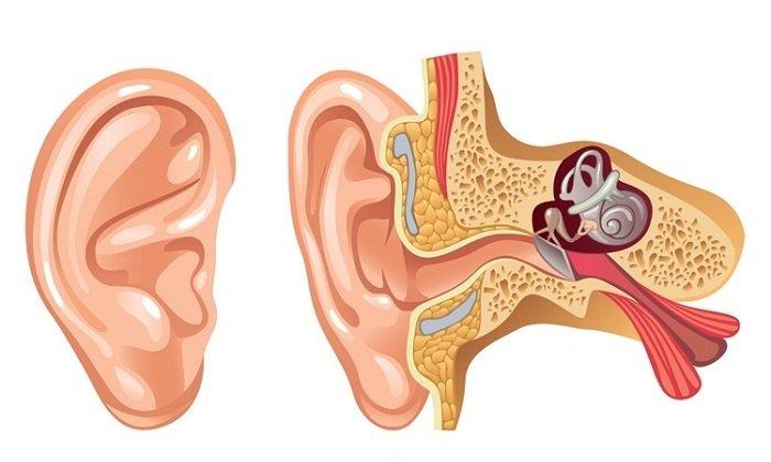 Лекарство помогает при воспалительных процессах в наружном и среднем слуховом проходе