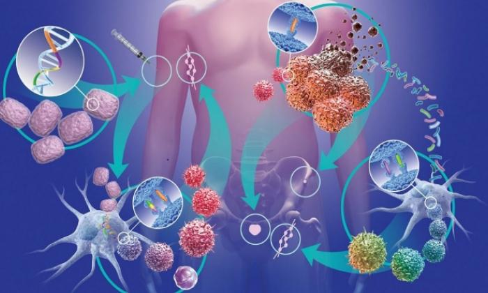 Лекарственное средство повышает противораковый иммунитет