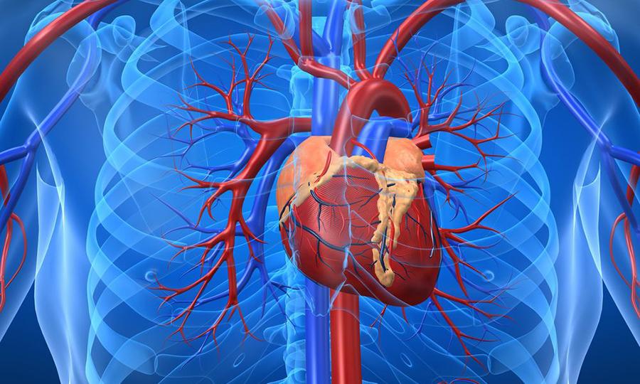 Фортранс не применяют при тяжелой сердечно-сосудистой недостаточности