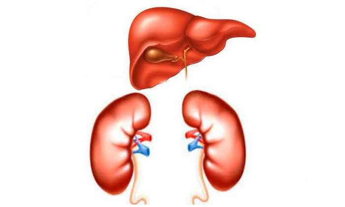 Нужно соблюдать осторожность во время лечения Гидрокортизоновой мазью при нарушении функции печени и почек