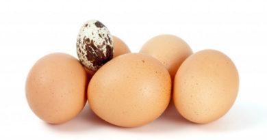 Полезны ли куриные и перепелиные яйца для потенции