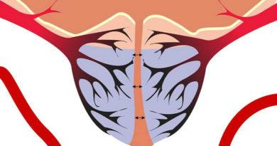 Как устроено кровоснабжение простаты и можно ли его улучшить