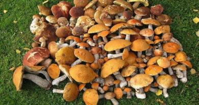 Польза грибов для мужской потенции